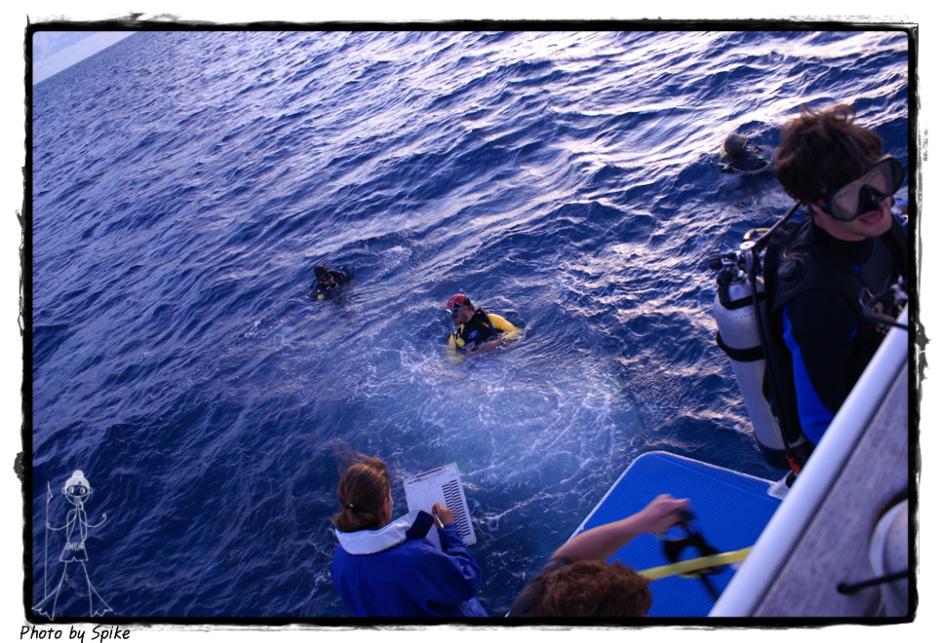 그레이트 베리어 리프 리브어보드(The Great Barrier Reef)..산호의 원류2