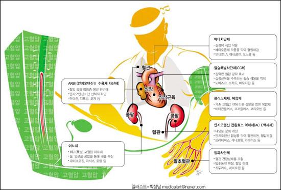 고혈압 약 작용부위 작용약물 작용기전