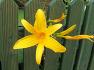 7월의 꽃